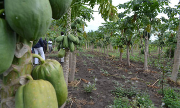 Agroforestry can improve food security