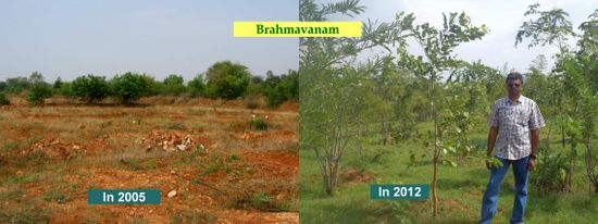 Healthy Wealth from Degraded Dry Land with Trees