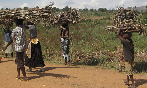 Carrying firewood in Rwanda. Photo by Daisy Ouya/ICRAF