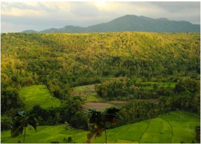 Teak in a landscape in Sumbawa, West Nusa Tenggara